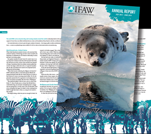 Award-Winning IFAW Annual Report